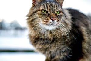 Malá kočičí modelka